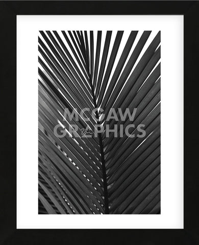 Palms 9  (Framed) -  Jamie Kingham - McGaw Graphics