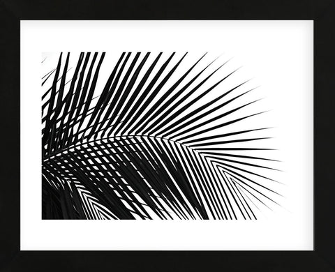Palms 10  (Framed) -  Jamie Kingham - McGaw Graphics