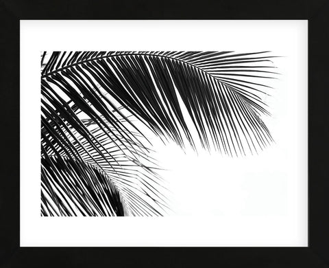 Palms 11  (Framed) -  Jamie Kingham - McGaw Graphics