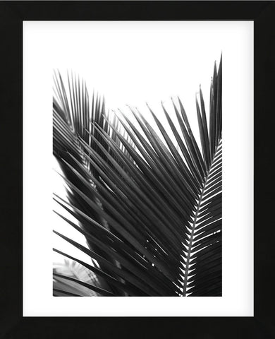 Palms 12  (Framed) -  Jamie Kingham - McGaw Graphics
