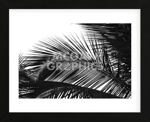 Palms 13  (Framed) -  Jamie Kingham - McGaw Graphics