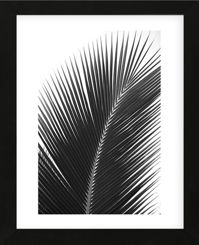 Palms 14  (Framed) -  Jamie Kingham - McGaw Graphics