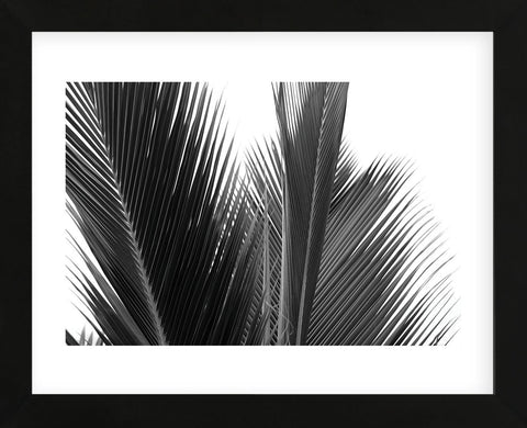 Palms 15  (Framed) -  Jamie Kingham - McGaw Graphics