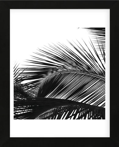 Palms 13 (detail)  (Framed) -  Jamie Kingham - McGaw Graphics