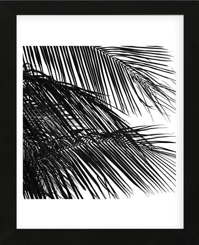 Palms 4 (detail)  (Framed) -  Jamie Kingham - McGaw Graphics