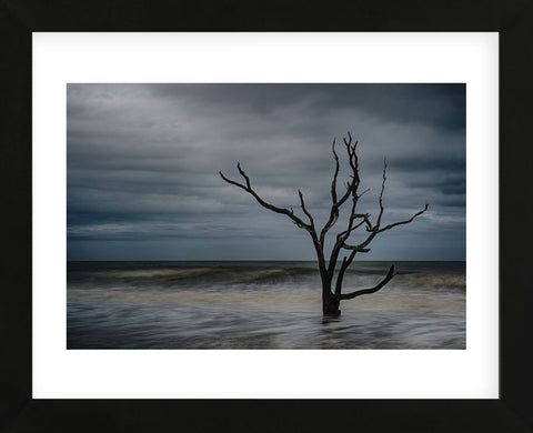 Tree on Botany Bay (Framed) -  Robert Lott - McGaw Graphics