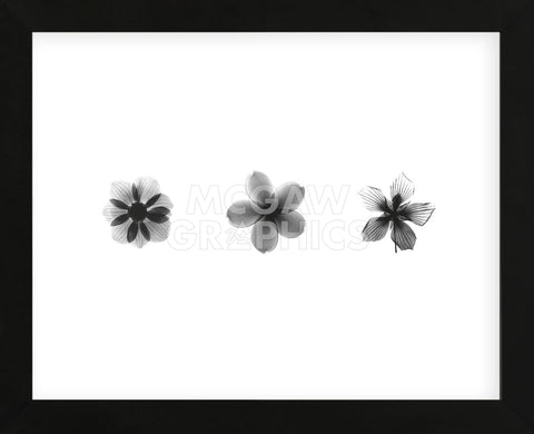 X-Ray Frangipani Triptych (Framed) -  Bert Myers - McGaw Graphics