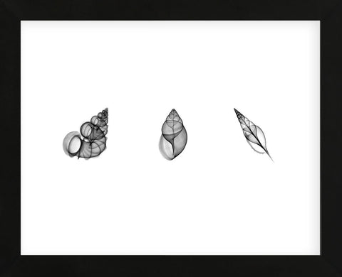X-Ray Landsnail Triptych (Framed) -  Bert Myers - McGaw Graphics