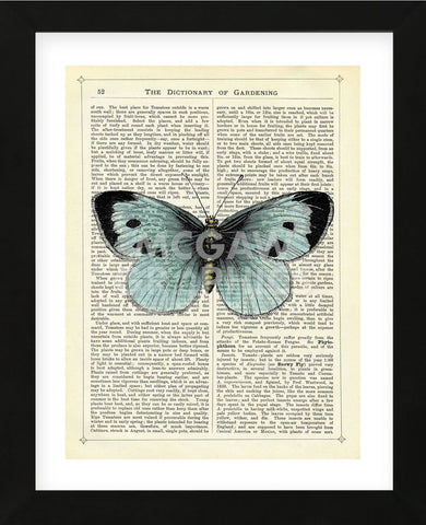 Blue Butterfly (Framed) -  Marion McConaghie - McGaw Graphics