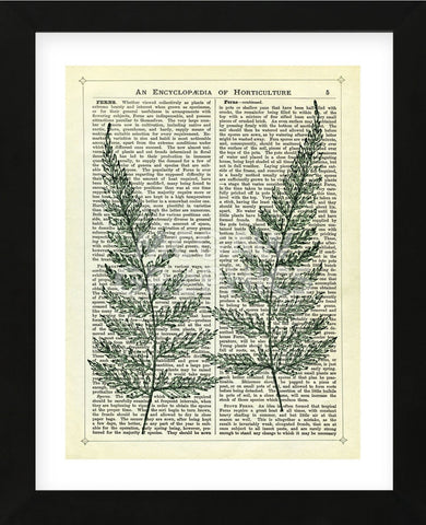 Fern (Framed) -  Marion McConaghie - McGaw Graphics