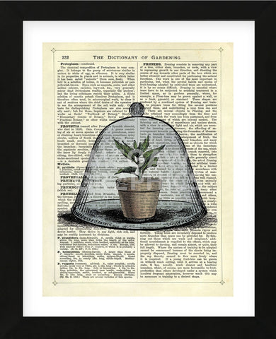 Plant Pot in Glass Cloche (Framed) -  Marion McConaghie - McGaw Graphics