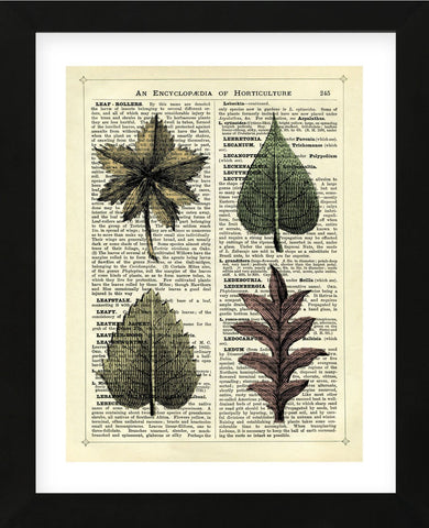 Set of 4 Leaves (Framed) -  Marion McConaghie - McGaw Graphics