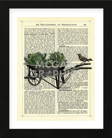 Wheelbarrow Lettuce & Bird (Framed) -  Marion McConaghie - McGaw Graphics