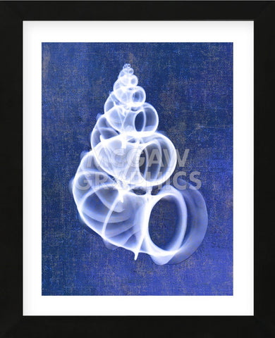 Wentletrap Shell (indigo) (Framed) -  Bert Myers - McGaw Graphics
