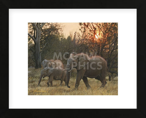 Sundown Elephants (Framed) -  John Mullane - McGaw Graphics