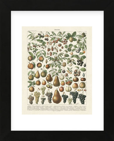 Fruits II (Framed) -  Adolphe Millot - McGaw Graphics