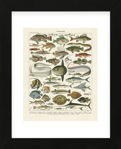 Poissons I (Framed) -  Adolphe Millot - McGaw Graphics