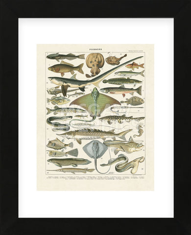 Poissons II (Framed) -  Adolphe Millot - McGaw Graphics