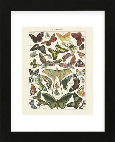 Papillons I (Framed) -  Adolphe Millot - McGaw Graphics