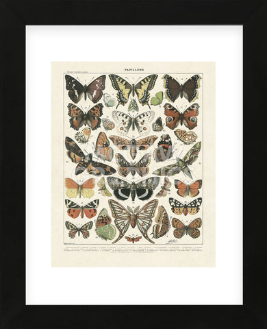 Papillons II (Framed) -  Adolphe Millot - McGaw Graphics