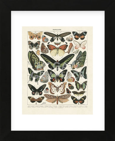 Papillons III (Framed) -  Adolphe Millot - McGaw Graphics