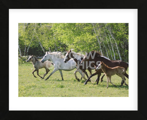 Running Free (Framed) -  Orah Moore - McGaw Graphics