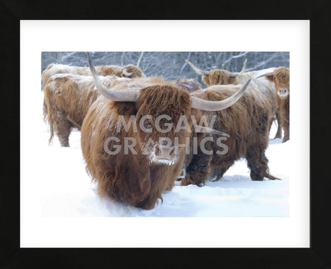 Scottish Highlanders (Framed) -  Orah Moore - McGaw Graphics