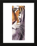 Tiger Eye  (Framed) -  Mitch Ridder - McGaw Graphics