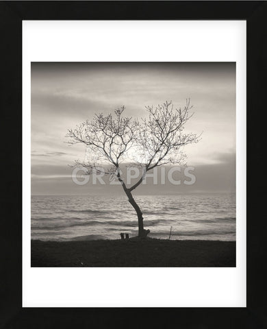 Tree, Study #5  (Framed) -  Andrew Ren - McGaw Graphics