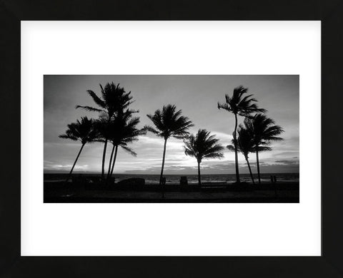 Sunrise Palms (Framed) -  Harold Silverman - McGaw Graphics