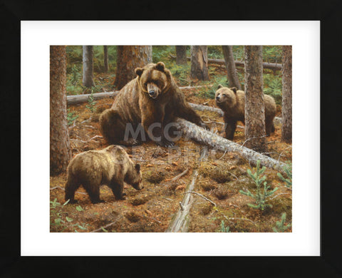 Raiding the Squirrel Midden (Framed) -  Kyle Sims - McGaw Graphics