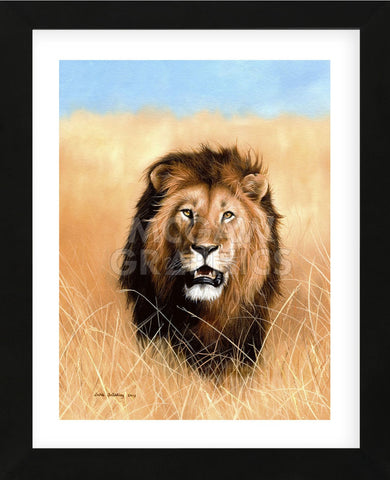 African Savannah Lion (Framed) -  Sarah Stribbling - McGaw Graphics
