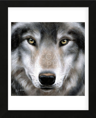 Grey Wolf Portrait (Framed) -  Sarah Stribbling - McGaw Graphics