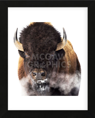 Yellowstone Bison (Framed) -  Jason Savage - McGaw Graphics