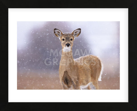 Winter White-tailed Deer (Framed) -  Jason Savage - McGaw Graphics