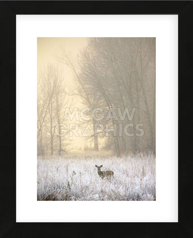 White-tailed Deer in Fog (Framed) -  Jason Savage - McGaw Graphics