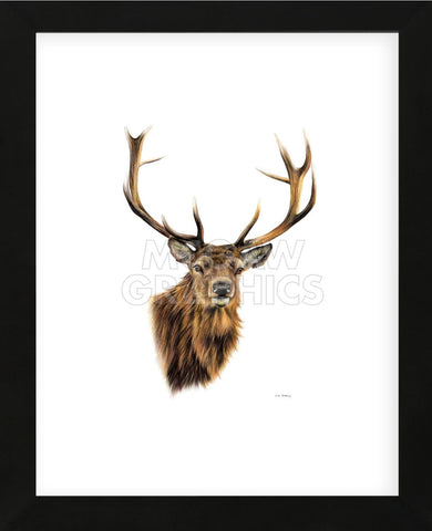 Stag White Background (Framed) -  Sarah Stribbling - McGaw Graphics