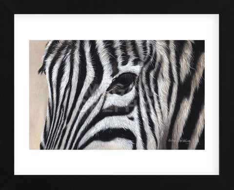Zebra Eyes (Framed) -  Sarah Stribbling - McGaw Graphics