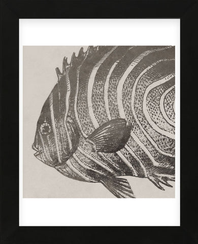 Vintage Fish II (Framed) -  Sparx Studio - McGaw Graphics