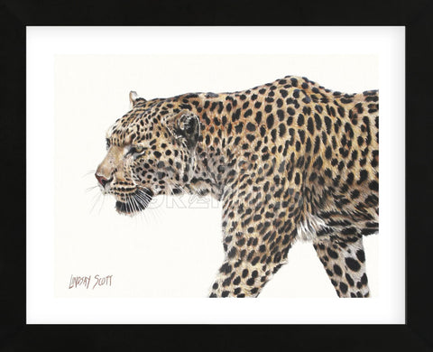 Passing Leopard (Framed) -  Lindsay Scott - McGaw Graphics