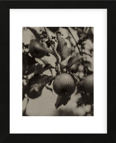 Apple and Drops of Rain, Lake George, 1922 (Framed) -  Alfred Stieglitz - McGaw Graphics