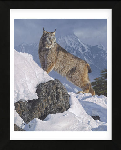 Austere Ascent (Lynx) (Framed) -  Daniel Smith - McGaw Graphics