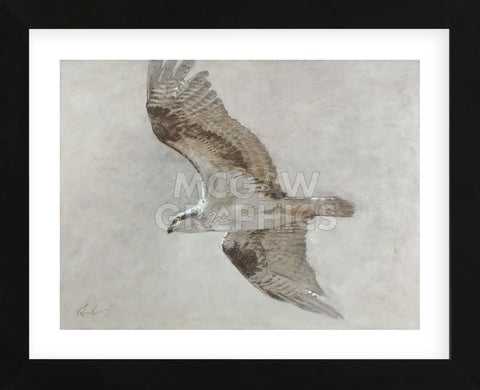 Searching Osprey (Framed) -  Todd Telander - McGaw Graphics