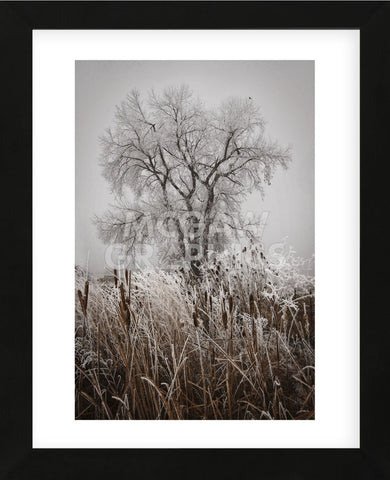 Cattails Teasel and Tree (Framed) -  David Lorenz Winston - McGaw Graphics
