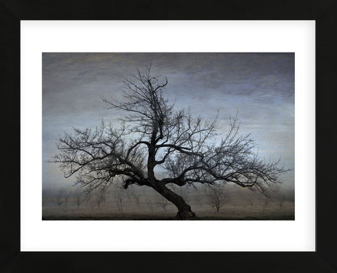 Farm House Tree (Framed) -  David Lorenz Winston - McGaw Graphics