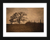 Tree and Fence II (Framed) -  David Lorenz Winston - McGaw Graphics