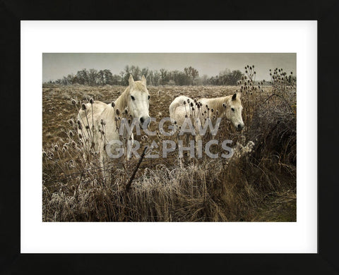 White Horses (Framed) -  David Lorenz Winston - McGaw Graphics