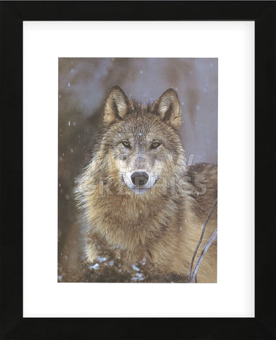 Woodland Pride, Montana  (Framed) -  Art Wolfe - McGaw Graphics