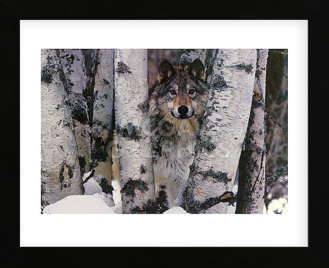 Mountain Ranger  (Framed) -  Art Wolfe - McGaw Graphics