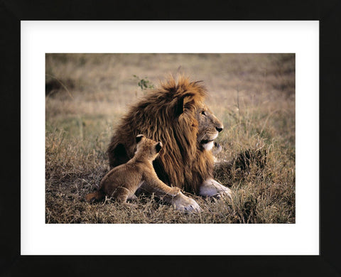 Father Knows Best (Framed) -  Art Wolfe - McGaw Graphics